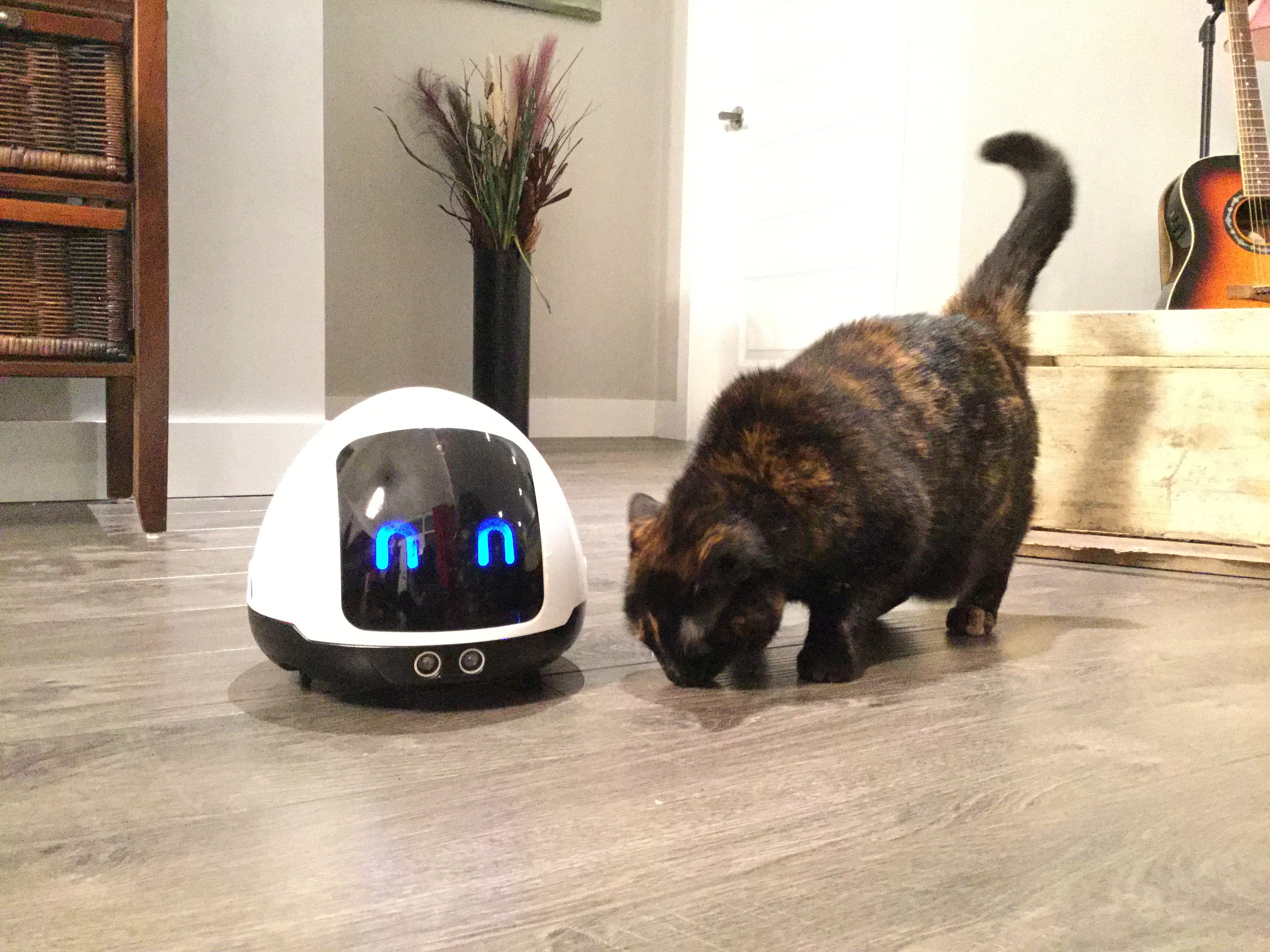 Our robot MIA with a Boston Terrier