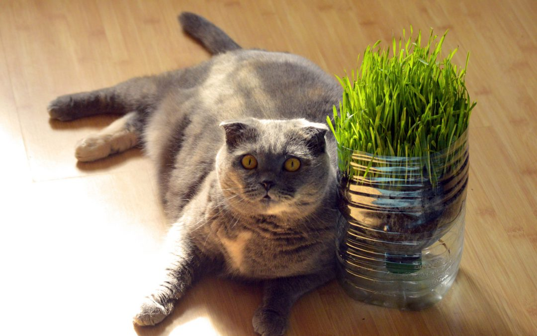 5 ways to help your cat loose weight